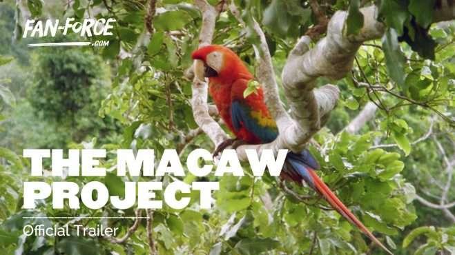 macaw-thumb